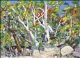 Sylvia Ditchburn - River Gums, Hakea and Escarpment, Finke River, Central Australia