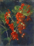 Redcurrants I