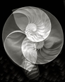 Fan, Nautilus &amp; Sea Shell Scapes, Study #112