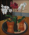 Phalaenopsis